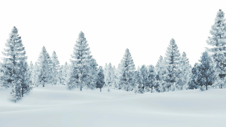 wintery day: Daytime winter scenery with snow-covered spruce forest on a white background