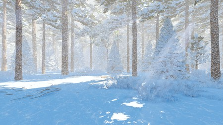 wintery day: Sunny winter day in a snowy spruce forest at snowfall