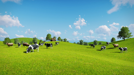 Herd of cows graze on the open green meadows at spring day. Realistic 3D illustration was done from my own 3D rendering file.