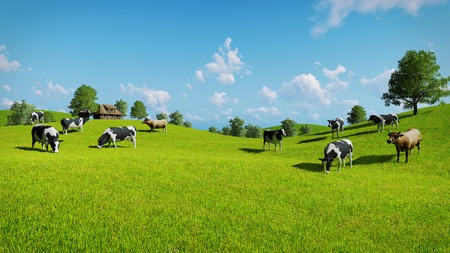Rural landscape with a herd of cows grazing on the green hills nearby from the rustic house. Realistic 3D illustration was done from my own 3D rendering file.