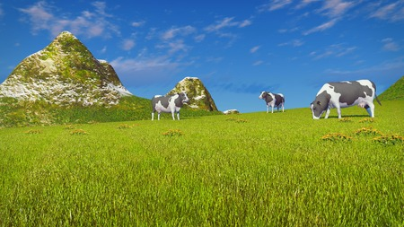 mottled: Farm landscape with a few mottled dairy cows grazing on a verdant mountain pasture at sunny day. Low angle view.