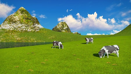 pastoral: Few mottled dairy cows graze on a verdant alpine pasture at sunny day. Mountains and lake on the background.