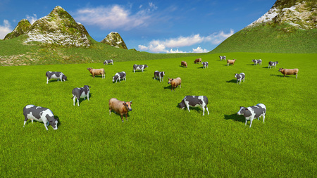 herd: Aerial view of a herd of dairy cows grazing on a green alpine pasture at sunny day. Mountains on the background. Stock Photo