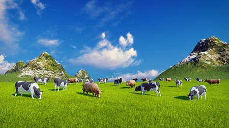verdant: Herd of dairy cows graze on a verdant alpine pasture at sunny day. Mountain peaks on the background.