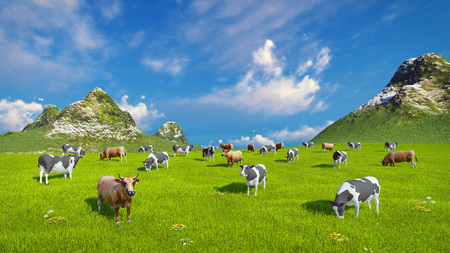 dairy cows: Farm landscape with a herd of dairy cows grazing on a verdant alpine pasture Stock Photo
