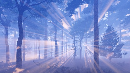misty forest: Magical woodland scenery. Misty pine forest with sun light rays and fog at dawn or dusk.