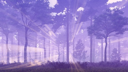 thick forest: Woodland scenery with thick fog and sun rays shining through the trees in a misty pine forest at dawn or dusk Stock Photo