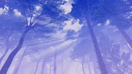 lookup: Fairytale forest with sun rays shines through the crowns of pine trees at misty dawn or dusk. Low angle view.