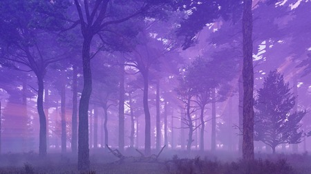 scenic: Scenic mysterious pine forest at foggy dawn or dusk. Woodland scene 3D illustration.