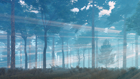 misty forest: Foggy mystical pine forest with sunbeams shining through the trees at misty dawn or dusk