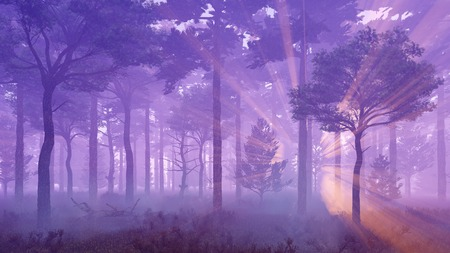 Fairytale woodland scenery. Misty pine forest with sun light rays and thick fog at sunset.