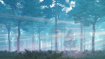 Misty pine forest basking in sunlight and sun rays shines through the trees at dawn or dusk Stock Photo