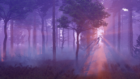 misty: Scenic sunset in a misty pine forest with sun light rays shining through the trees at dawn or dusk