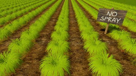 Wooden sign No Spray among green garden beds of chemical free agricultural plants on organic eco farming field. Close up view 3D illustration.