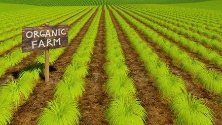 Eco farming field with long rows of fresh green chemical free agriculture plants and hand drawn wooden board Organic Farm 3D illustration Stock Photo