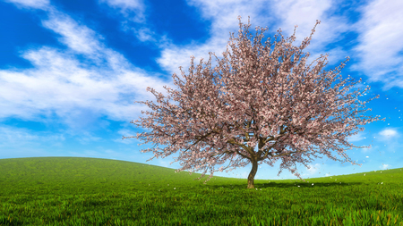 Lush blooming single sakura cherry tree with falling flower petals against bright cloudy sky and green grass field on a background at sunny spring day. 3D illustration from my own 3D rendering file.