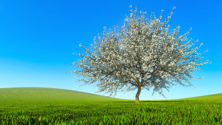 Lush blooming single sakura cherry tree on a hills covered with fresh green grass against clear blue sky on a background at spring day. Springtime season 3D illustration from my 3D rendering file.