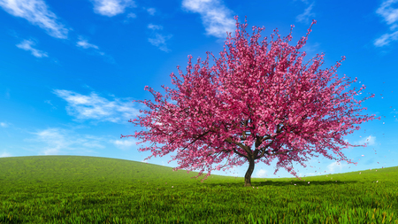 Spring landscape with single blooming sakura cherry tree and falling pink flower petals on a hills covered with fresh green grass at daytime. Springtime 3D illustration from my 3D rendering file.