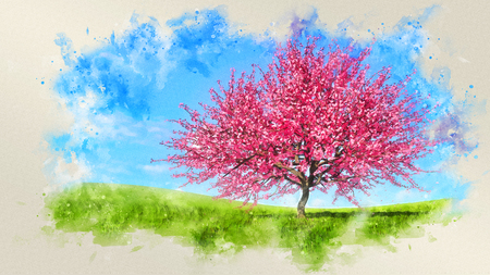 Decorative watercolor spring landscape with scenic pink sakura cherry tree in full blossom on field covered with green grass at daytime. Digital art painting from my own 3D rendering file.