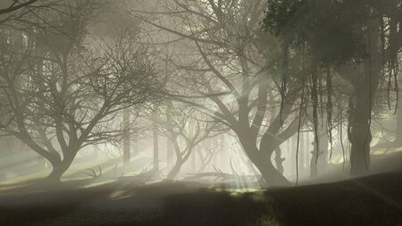 Dark mysterious forest with last sun rays shining through scary dead trees silhouettes at foggy dawn or dusk. Dreamlike woodland landscape 3D illustration from my own rendering file. Imagens