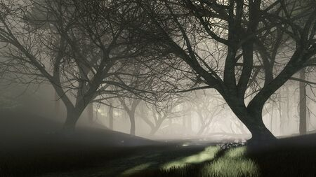 Dark mystical forest with last sun rays shining through creepy dead trees silhouettes at foggy dusk or night. Fantasy woodland scenery 3D illustration from my own rendering file. Imagens