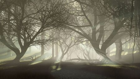 Mysterious dark haunted forest with last sun rays shining through creepy dead trees silhouettes at misty dawn or dusk. Fantasy woodland scenery 3D illustration from my rendering file. Imagens