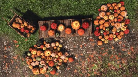 Top view of various colorful autumn pumpkins for sale at outdoors country market for Thanksgiving or Halloween holidays. With no people festive fall season 3D illustration from my rendering file.
