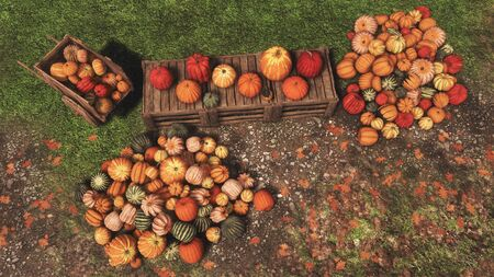 Autumn harvest of pumpkins laid out on wooden crates and on ground at outdoor rural farmer's market. Top view festive 3D illustration for Thanksgiving or Halloween from my own rendering file. Foto de archivo - 132566333