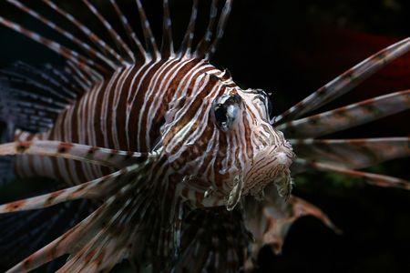 descriptive: Tropical  fish №3