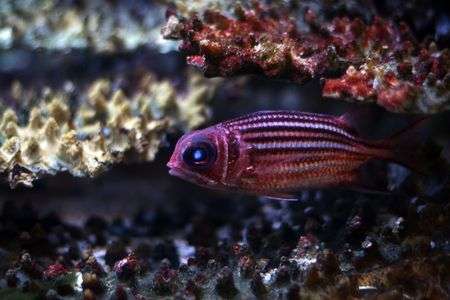 descriptive: Tropical  fish №10 Stock Photo