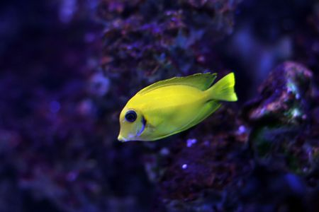 Tropical fish №12 Stock Photo - 1063621