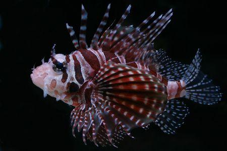 Tropical fish №15 Stock Photo - 1063624