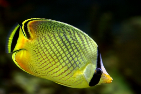 exoticism: Tropical fish №16 Stock Photo