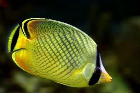 Tropical fish №16 Stock Photo