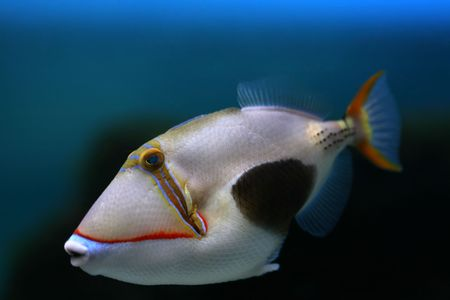 Tropical fish №21 Stock Photo - 1063629