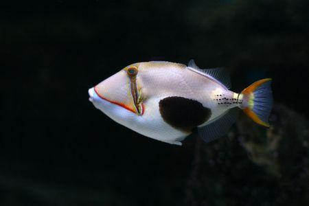 Tropical fish №24 Stock Photo - 1063631