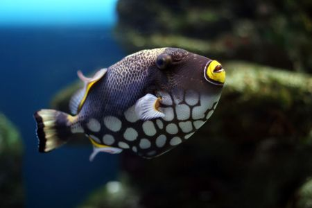 Tropical fish №28 Stock Photo - 1063635