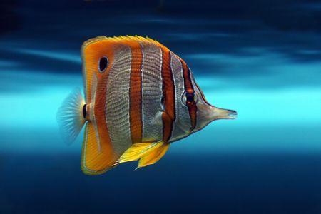 Tropical fish №29 Stock Photo