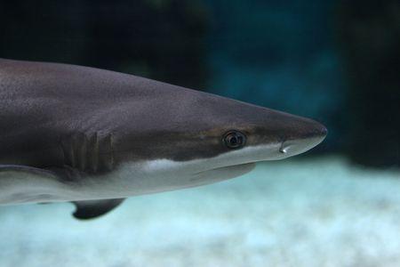 shark Stock Photo - 1078485