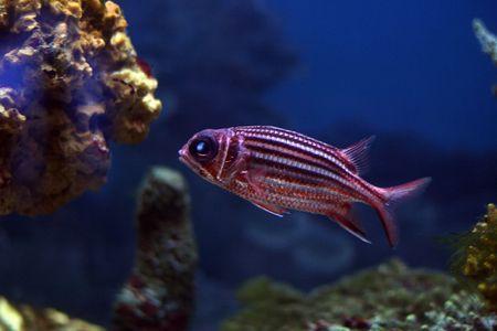 tropical fish № 31 Stock Photo - 1078486