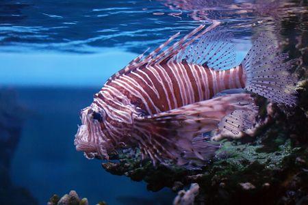 tropical fish № 34 Stock Photo - 1078489