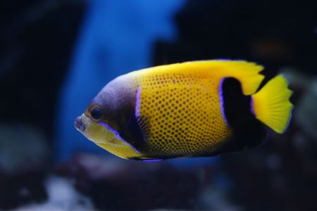 tropical fish № 35 Stock Photo - 1078490