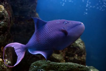 tropical fish № 36 Stock Photo - 1078495