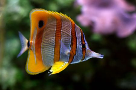 tropical fish № 38 Stock Photo - 1078497
