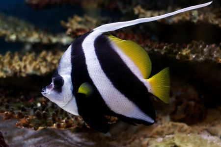 tropical fish № 39 Stock Photo - 1118483