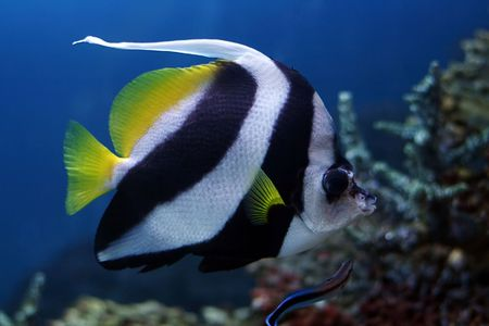tropical fish № 41 Stock Photo - 1118485