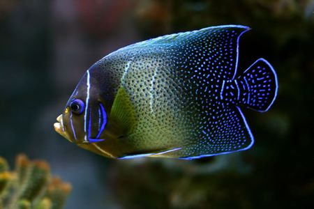 tropical fish № 42 Stock Photo - 1118487