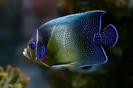 tropical fish № 42 Stock Photo