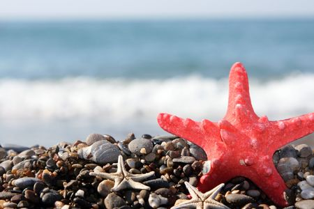 Starfish on a background of the dark blue sea