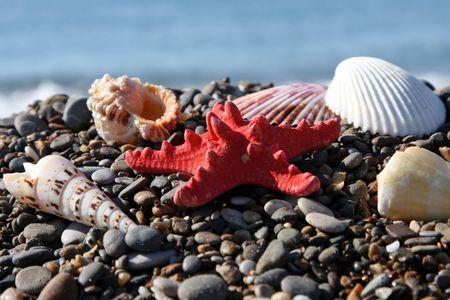seacoast: Starfish and cockleshells on seacoast